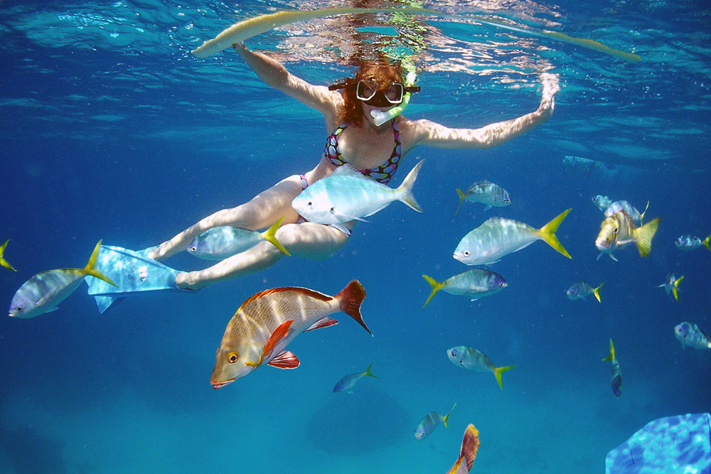 Snorkeling with fish