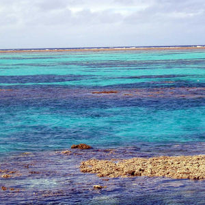Colors of the reef